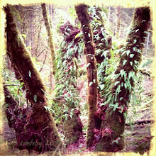 Photo: A wet Sunday walk along the Ridgeline Trail, south of Eugene, brings forward the wonderous forest that surrounds me with ferns that grow on trees.