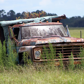 Fords last Forever by Rob Frederick - Novices Only Objects & Still Life ( field, truck, grass, ford, junk )
