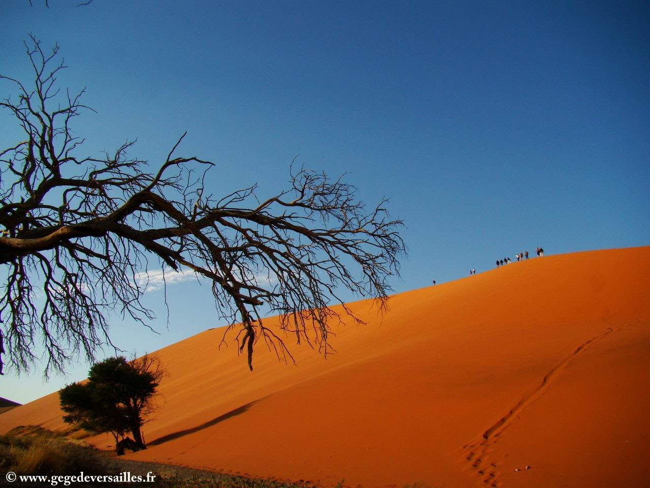 Photo: #118-La dune 45 à Sossusvlei