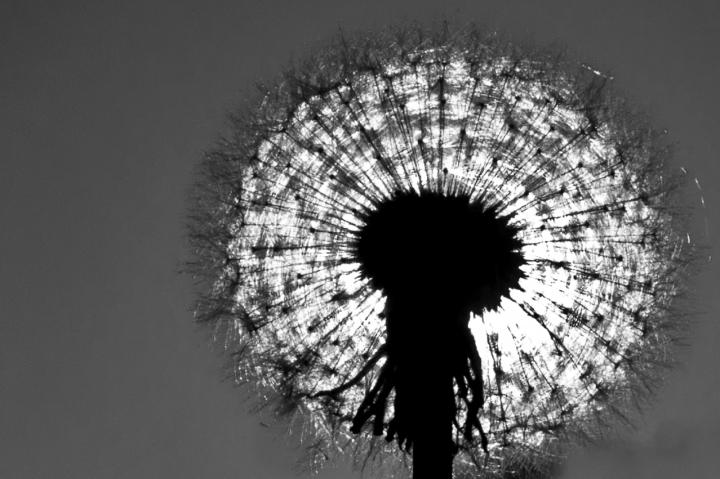 Come il sole.. di Paolo Sartorio