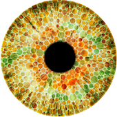Colour Blindness Detector
