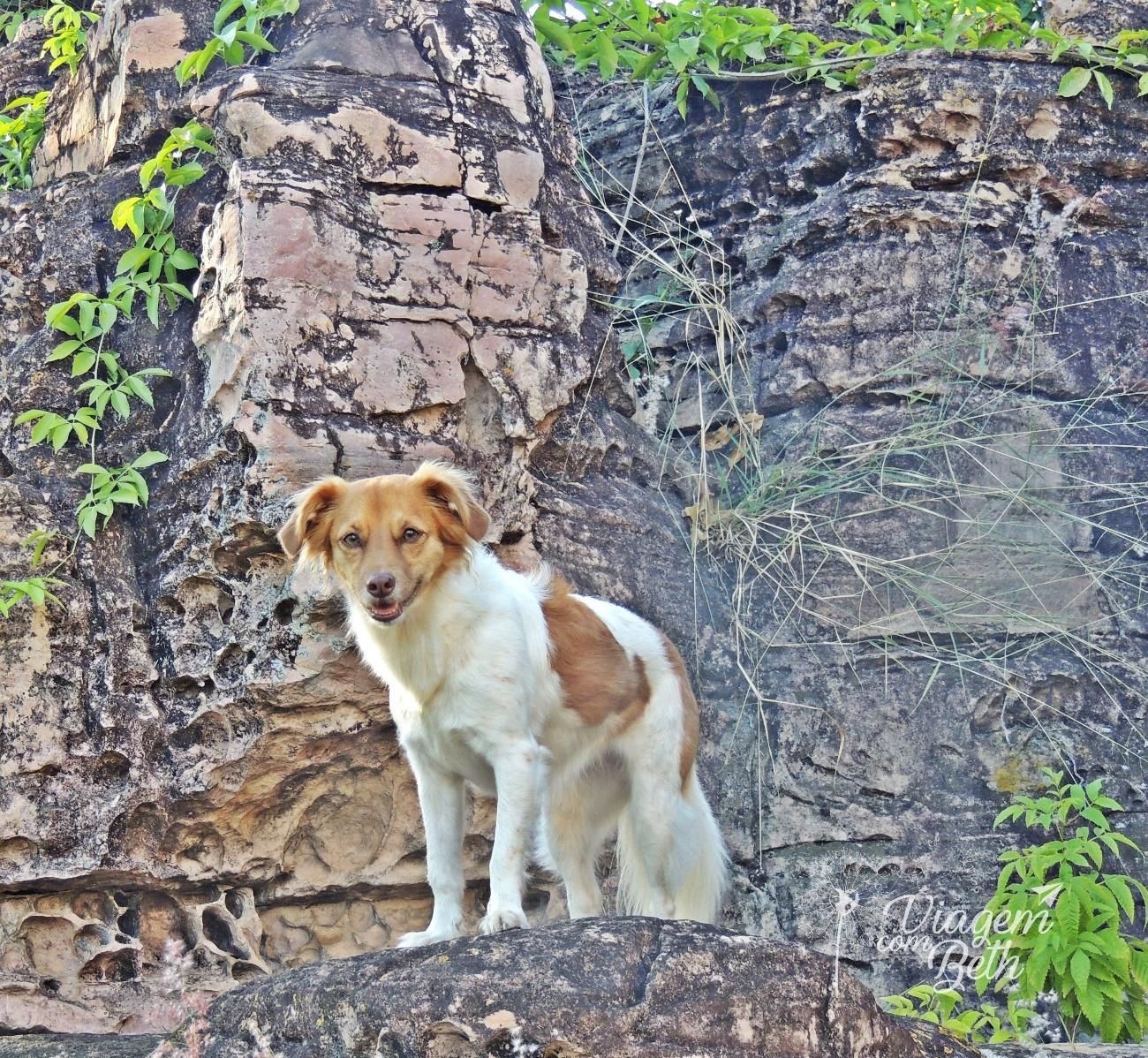 Foto dog - Nina Dog na Chapada