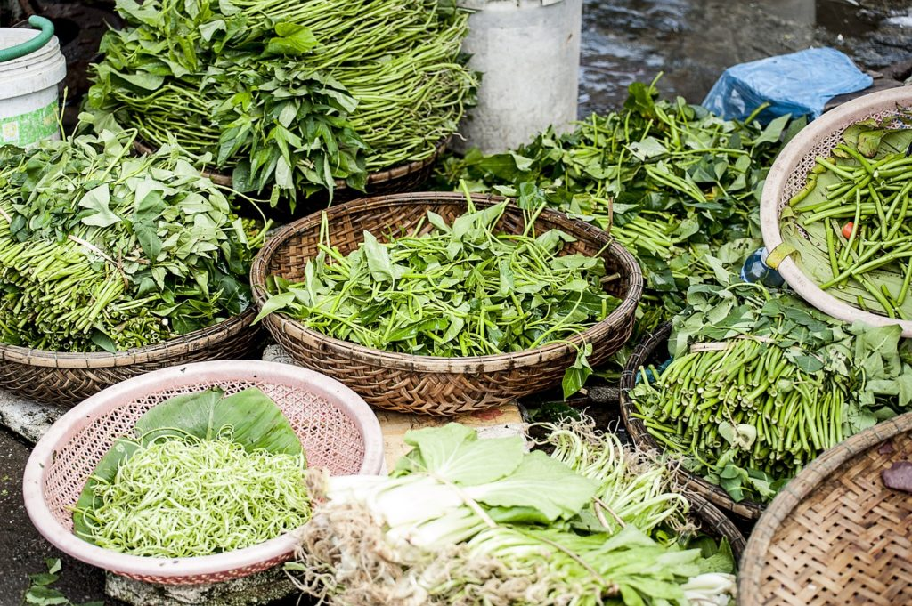 agriculture, close-up, flora