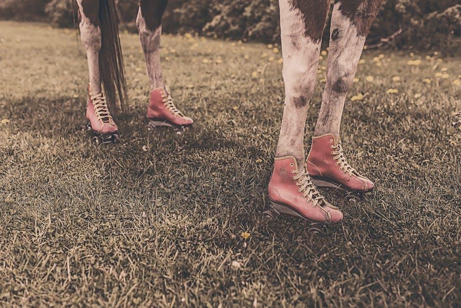 feet-legs-animal-farm.jpg