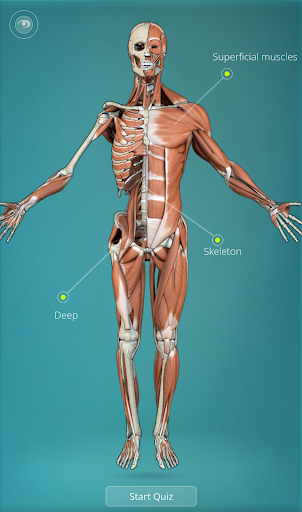 Anatomy Quiz - muscles bones