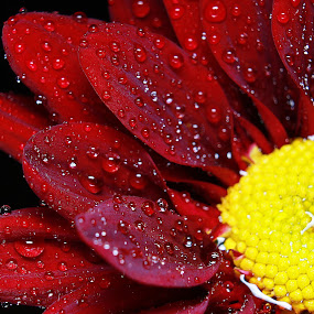 by Ady Putra - Nature Up Close Flowers - 2011-2013 (  )
