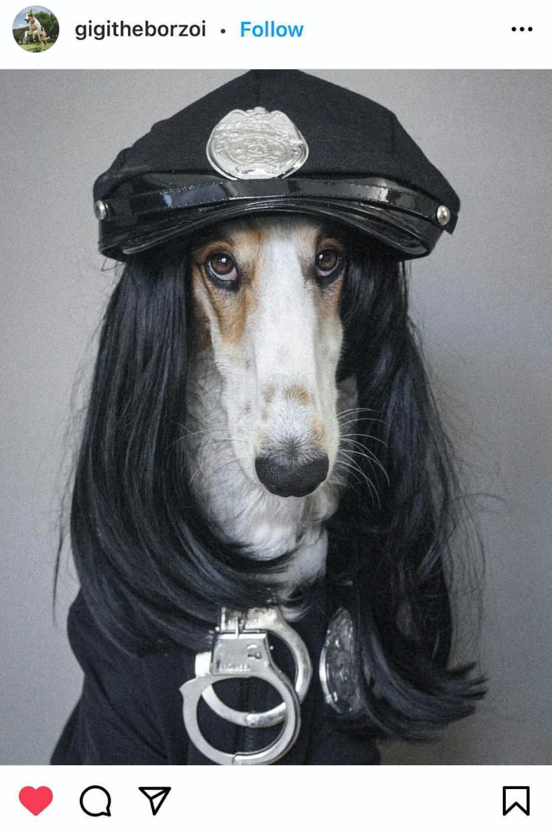 Halloween Costume Ideas For Dogs Police Officer