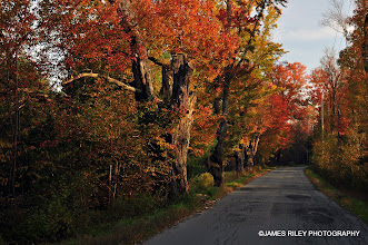 Photo: Happy Avenue in Autumn 002