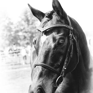 horse-joe.jpg
