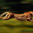 The Need For Speed | Email Archive Migration, PST Migration