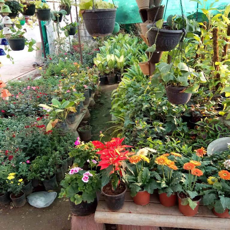 New Vrundavan Plant Nursery Wholesale Plant Nursery In Ahmedabad