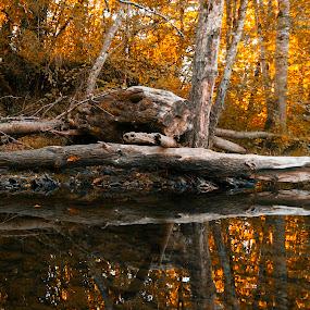Nuture's Reflex by Gabriel Cabrera - Landscapes Sunsets & Sunrises ( nature, sunrise, sunlight, reflex, portland oregon, river, reflection, reflections, mirror )