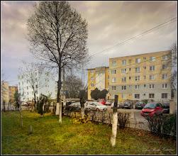Photo: Tei (Tilia) - de pe Calea Victoriei, Bloc B15 - 2017.11.26