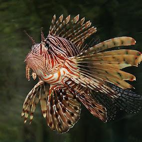 by Aroon  Kalandy - Animals Fish