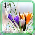Spring First Flowers icon