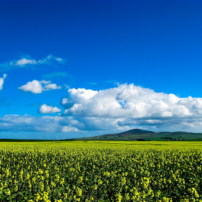 Canola Fields by Franco van Vuuren - Landscapes Prairies, Meadows & Fields ( durbanville, canola, south africa )