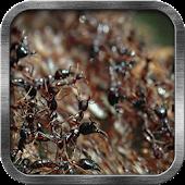 Ants Live Wallpaper