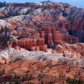Bryce Canyon by Chris Seaton - Landscapes Deserts ( utah, bryce canyon, hoodoos, red rock, landscape,  )