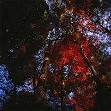 Photo: autumn rhapsody..........shot with kiev-60 on velvia 50