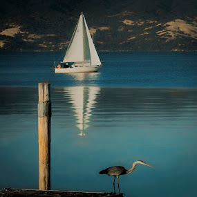 Boats and birds by Sharon Leckbee - Landscapes Waterscapes ( bird, water scape, sailboat )