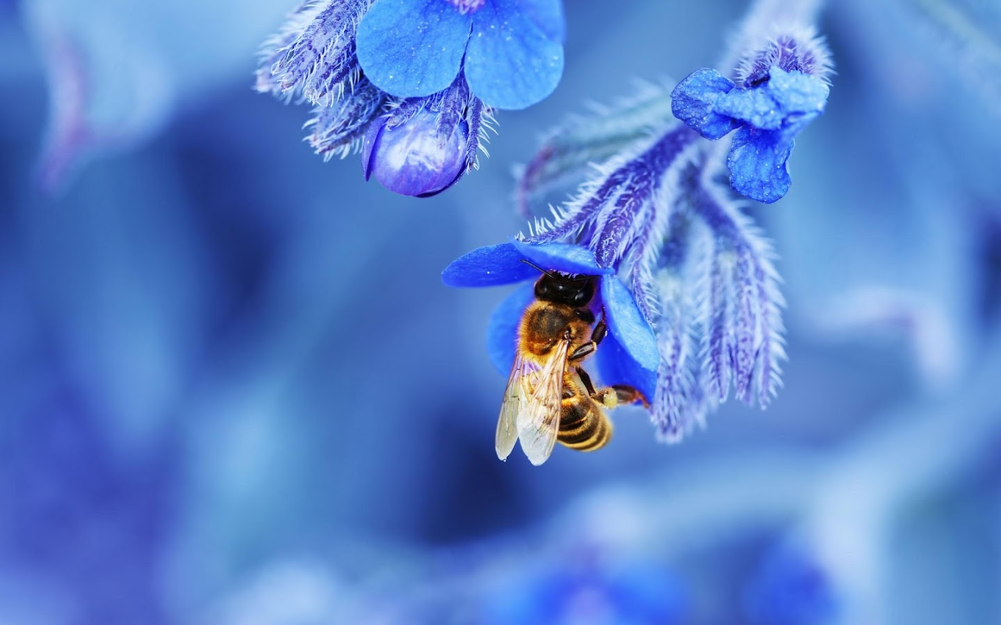 Bee Live Wallpaper- screenshot