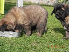 Photo: Malu - 6 Wochen alt, rechts Miss Ella