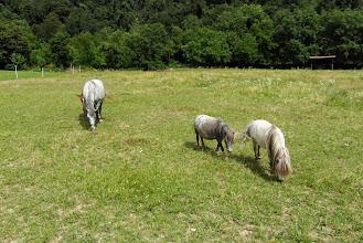 Photo: W drodze do Vipavy - coś dla Szubiego ( koni to tam sporo mieli )