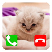 Talking Cat Call Prank