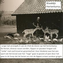 """Photo: Waaldijk """"Het hertenkamp"""""""