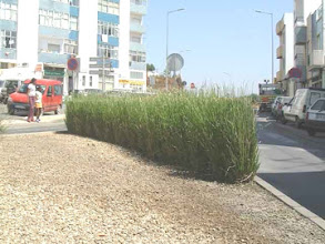 Photo: PRT-UR02 Lagos, Portugal. Vetiver used as a screen against oncoming car lights