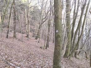 Photo: Am Harkort-Weg. WARNUNG: der Pfad am steilen Ruhrhang ist wegen querliegender Baumstämme und naher Wurzelausrißlöcher nur mit großer Umsicht zu begehen! Besondere Vorsicht bei schlechten Licht- und Witterungsverhältnissen!