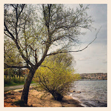 Photo: Tree by the lake.