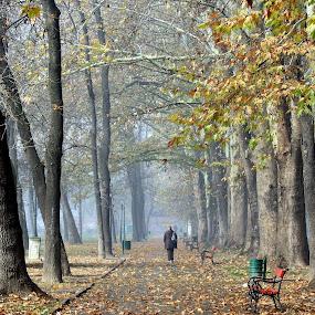 Autumn by Emil Chuchkov - Landscapes Weather ( cuckove canon park skopje autumn macedonia )
