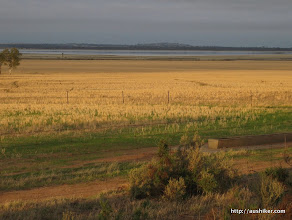 Photo: Golden Fields out of Kondinin - Esperance to Perth by Bicycle