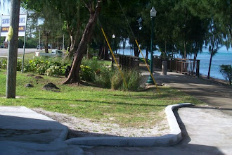 Photo: GUAM-UR01 - Vetiver grown near a seaside path In Guam