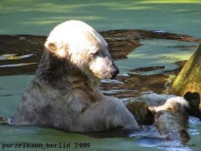 Photo: Verspielter Knut :-)