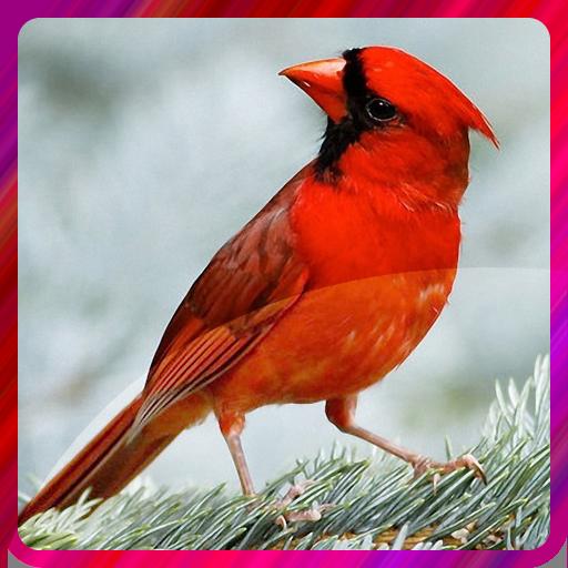 Bird Live Wallperpers 個人化 App LOGO-硬是要APP