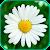 Лекарственные травы и растения file APK for Gaming PC/PS3/PS4 Smart TV