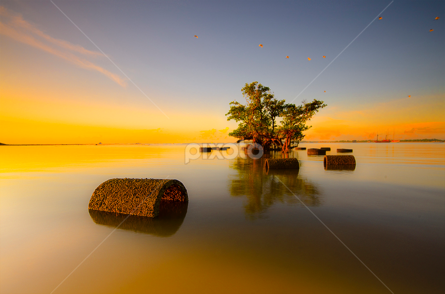 by Wisnu Taranninggrat - Landscapes Waterscapes ( bird, bali, tree, sanur, sunrise, waterspace, landscape,  )