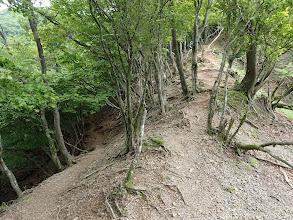 藤原岳トラバース分岐(左へ)