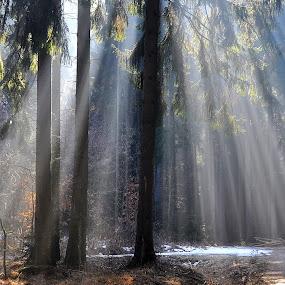 by Jana Kubínová - Landscapes Forests
