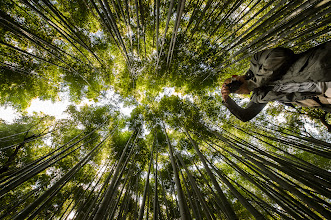 """Photo: This photo appeared in an article on my blog on Oct 22, 2013. この写真は10月22日ブログの記事に載りました。 """"Canopy of Bamboo"""" http://regex.info/blog/2013-10-22/2325"""