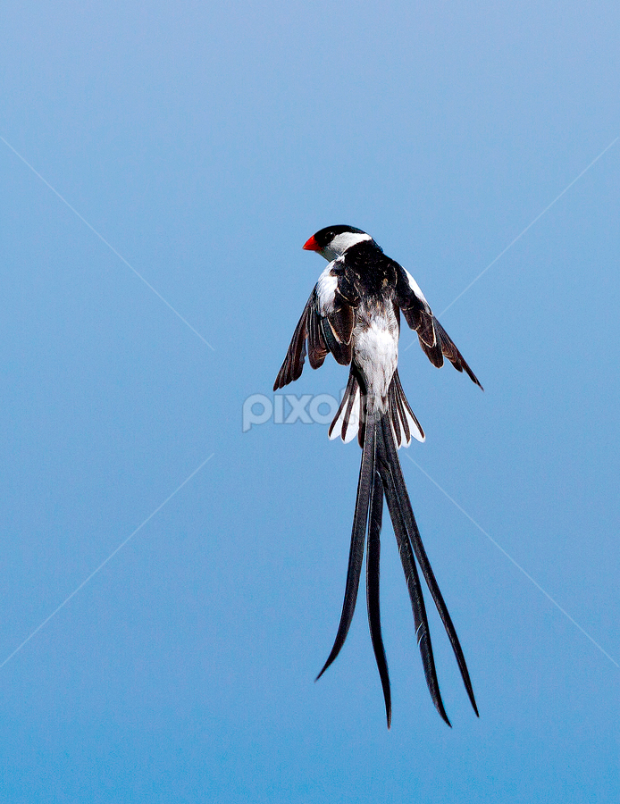 by Hugh-Daniel Grobler - Animals Birds