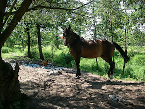 Photo: i koniki