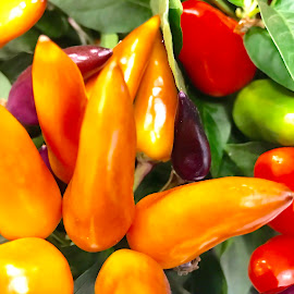 Paprika in the garden by Alesanko Rodriguez - Food & Drink Fruits & Vegetables ( paprika, colorful, food, green, vegetables, summer, beauty, yellow, garden )