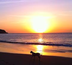 Photo: Dog walking on beach during sunset, Los Organos.