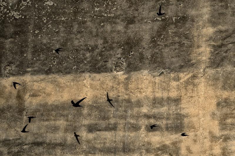Rondini... di Salvatore Maria Messana