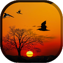 Sunset Live Wallpaper - Flying Bird LWP icon