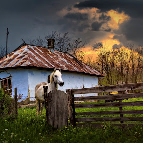 country life by Ionel Covariuc - Uncategorized All Uncategorized ( picture, horse, landscape, country )