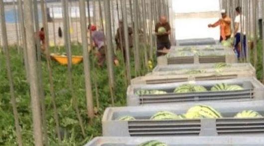 El 53% de los agricultores del Poniente no usan protector solar